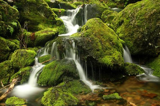 rocks moss amp water