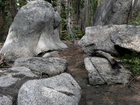 rocky forest yosemite national park