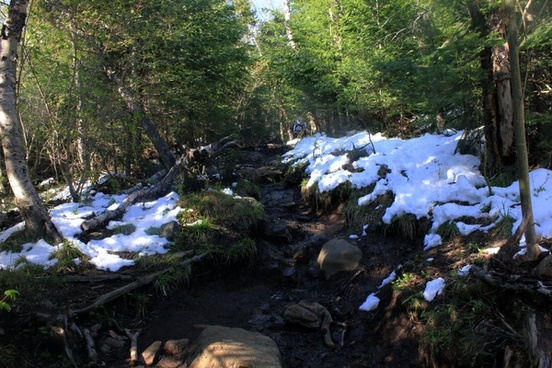 rocky trail the way down at adirondack mountains new york