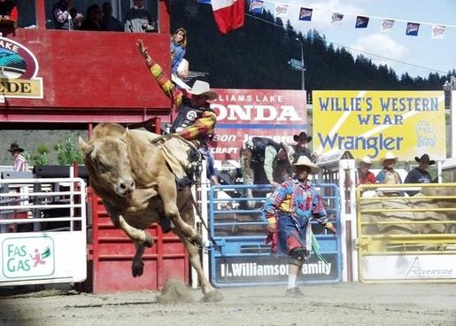 rodeo bull riding cowboy