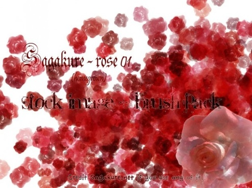 Rose 01 – Stock pack + Brushes