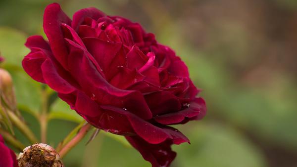In this valentine039s day in behalf of kiss day amp chennai escorts xxx httpwwwalinamalikcoin - 2 2