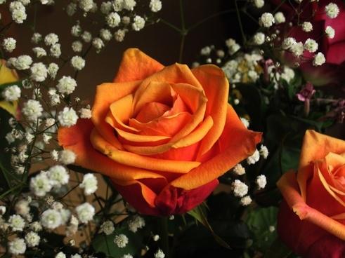 rose love luck