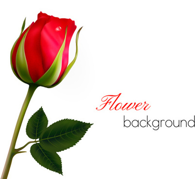 rose with blank background vector graphics