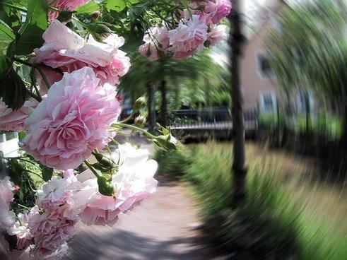 roses away filter