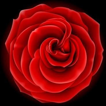 rose petal background modern closeup 3d sketch