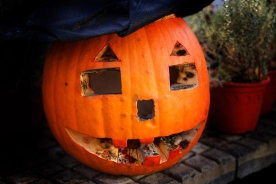 rotting halloween pumpkin