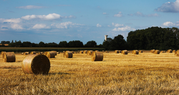 round bales to the north
