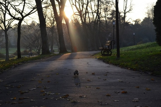 running a squirrel in the park