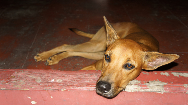 sad dog looking into eyes