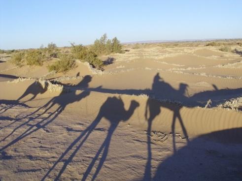 sahara morocco desert