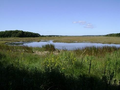 salt marsh view
