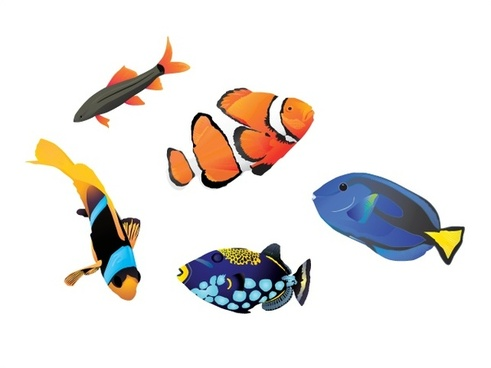 coloful ocean fishes vector illustration on white background