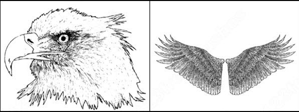 sample file from hand drawn wings, eagle and skull vector and photoshop brush