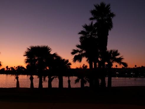 san diego sunset palms