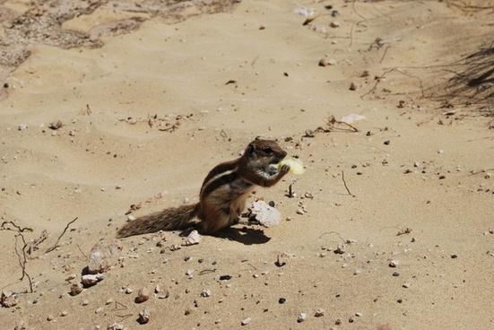 sand the squirrel squirrel