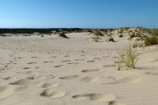 sand tracks sea grass