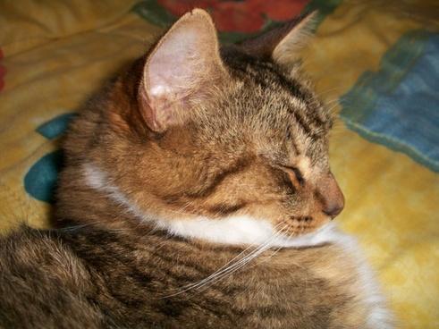 satisfied cat