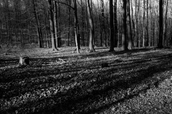 schatten shadows
