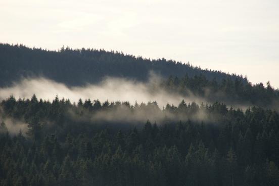 schluchsee black forest fog