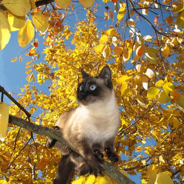 scruffy in the persimmon tree 365 323