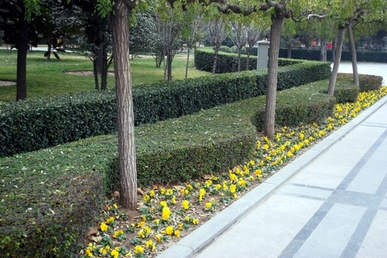 sculpted hedges