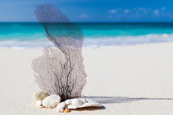 sea and beach concept