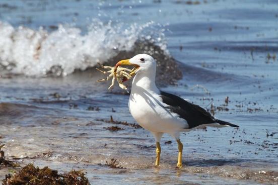sea birds albatross