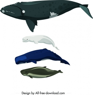 sea creatures icons swimming whale dolphin design