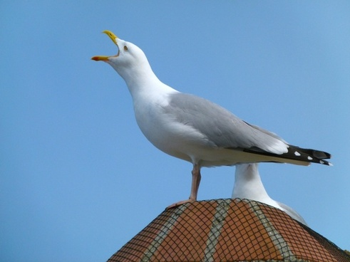 sea gull bird sky