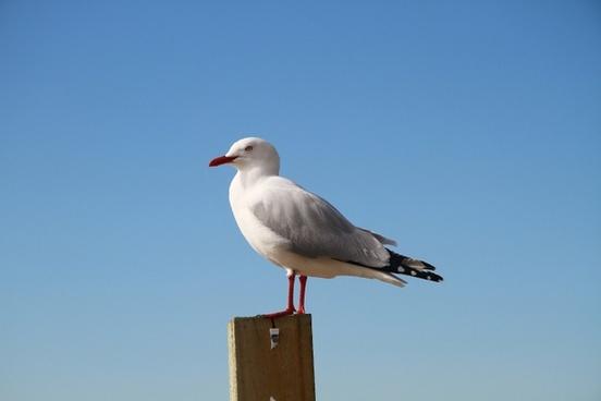 sea gull new zealand sky