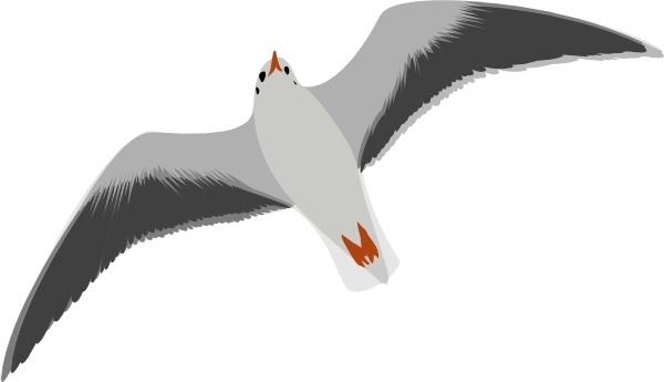 Sea Gull Seagull clip art