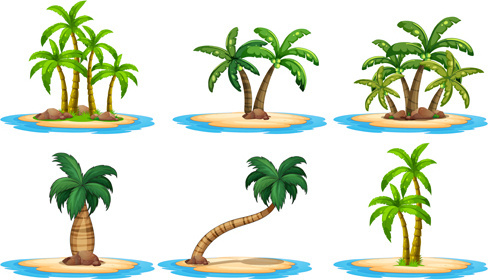 sea islands palm tree vector