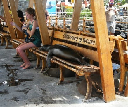 sea lion on bench