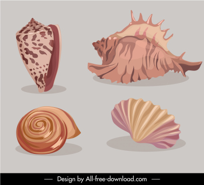 sea shell icons colored classic design