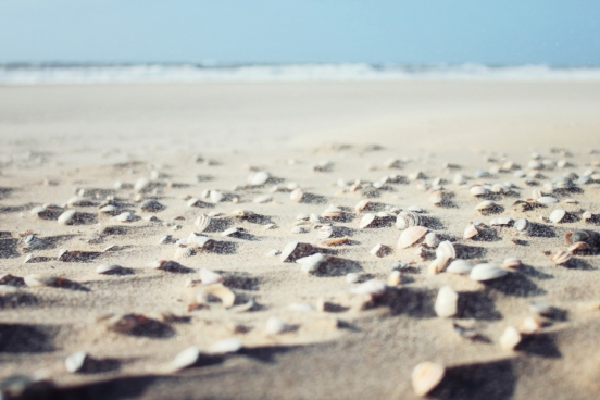 sea shells on beach