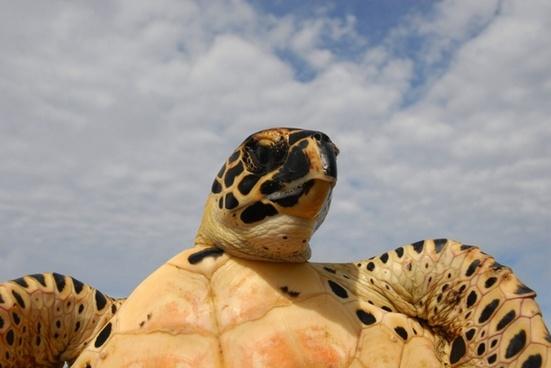 sea turtle sky