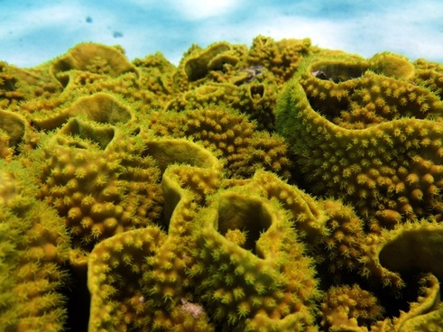sea underwater coral