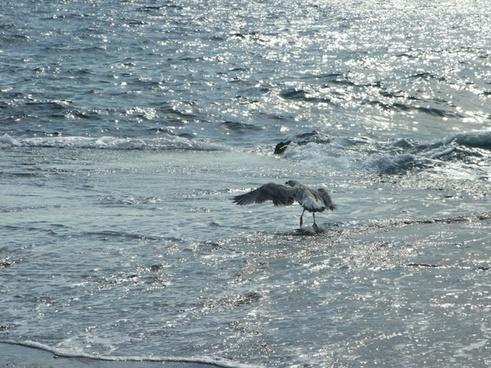 seagull bird sea gull