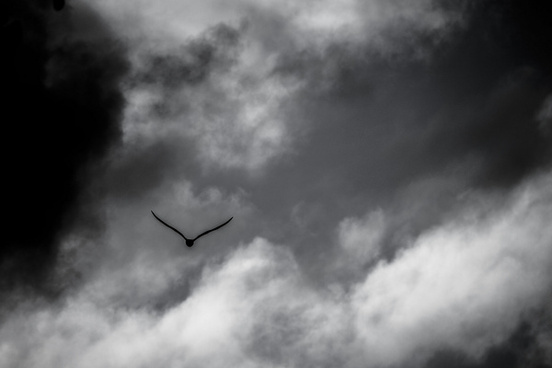seagull in the skies