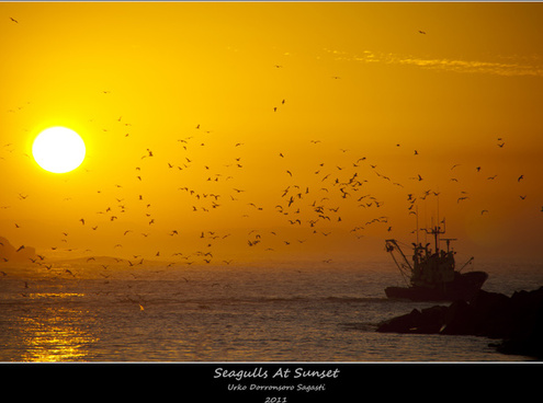 seagulls at sunset
