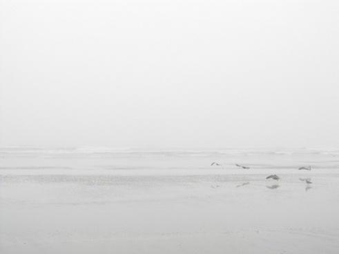 seagulls on a misty beach