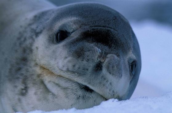 seal nature outside