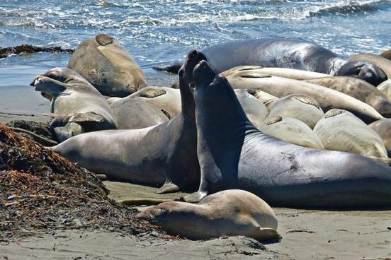 seals animals pacific