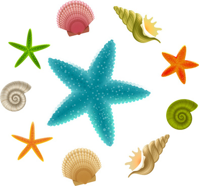 seashell and starfish collections
