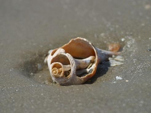 seashell shell seashore