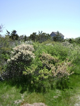 seaside flora