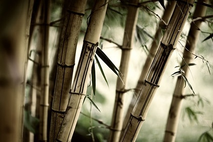 secluded bamboo forest picture