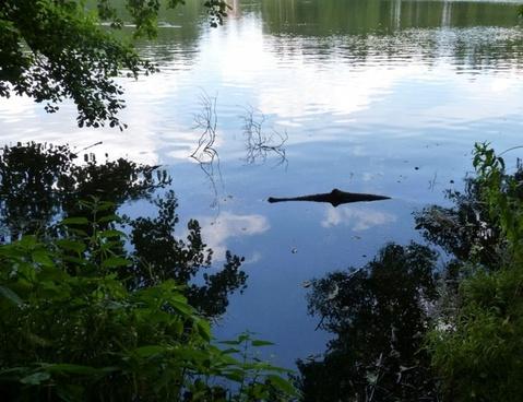 see crocodile optical