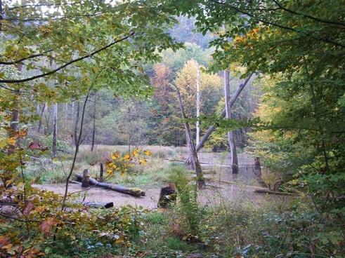 see pond water